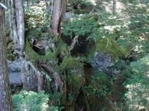 まが玉の丘〜数万年手つかずの自然 手の届くところに