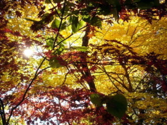 上林の紅葉