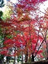 秋の熊野古道