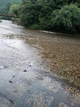 大村屋前を流れる大塔川
