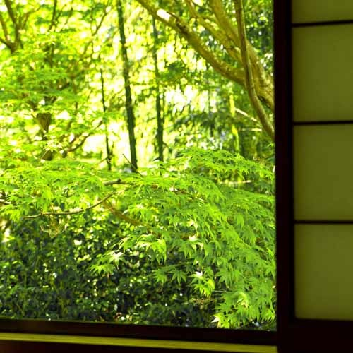 【お部屋から見える深緑2】
