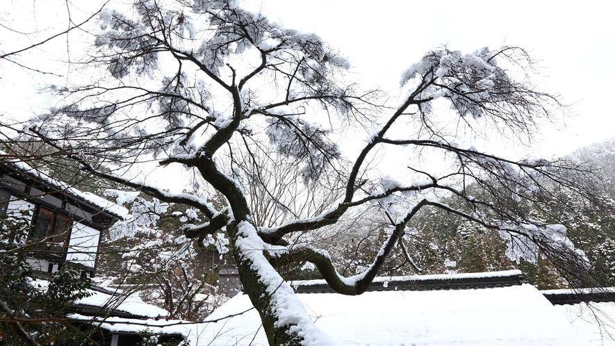 *【冬の中庭】雪景色を望む