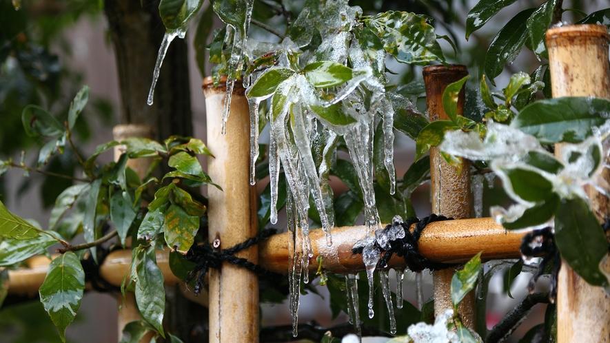 *【冬の風景】冬の姿はこんなところにも…♪