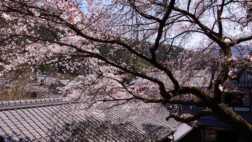 *【中庭】中庭には桜の木も植わっております。