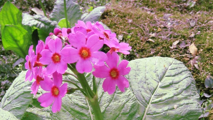*【周辺】美しい花が山を彩ります。