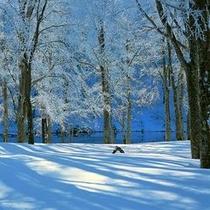 【ドッコ沼(独鈷沼】標高1,264m、開放感溢れるドッコ沼の真っ青な青空と冬景色♪