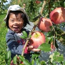 果樹園でりんご狩り30分食べ放題!さらに指定した袋に、自分で収穫したりんごをお土産にできる