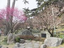 【春】熱海梅園 梅