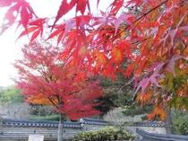 【秋】熱海梅園 もみじ祭り