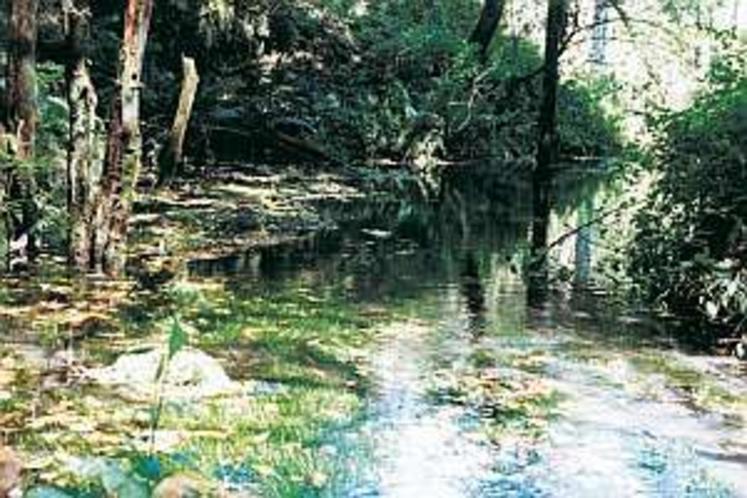 庭先に浅間山の湧水が流れ、山菜やクレソン採り、野鳥観察ができる。