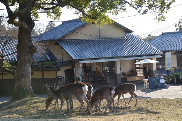奈良公園に泊まろう!世界遺産と自然、かわいい鹿に囲まれた場所で、ここだけの醍醐味を満喫!!