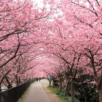 【2~3月】河津桜