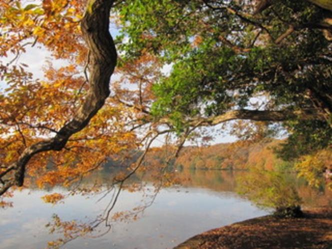一碧湖 紅葉