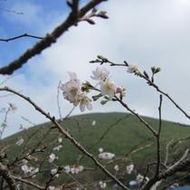 ■10月桜