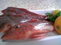 伊豆の新鮮なお魚ホウボウ