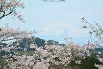 さくらの里 富士山とさくら