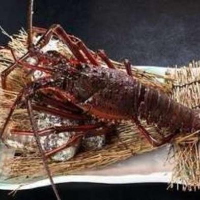 【伊勢海老】とおまかせの海鮮ワイン蒸し 鰹たたき付