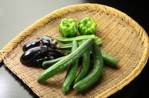 自家菜園の夏野菜