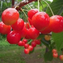 日本最北の果樹地域