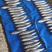 毎日セリに出かけて直接魚介類を仕入れしております