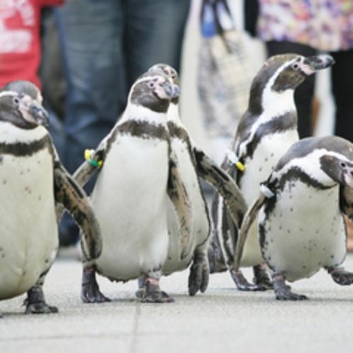 【城崎マリンワールド】セイウチ、ペンギンなど10種類のライブショーは毎日開催されています