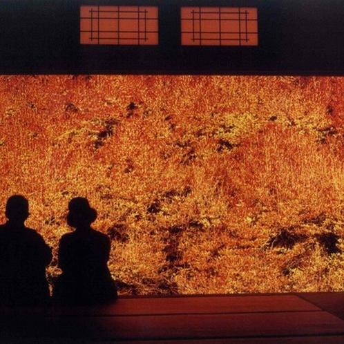 【但馬安国寺】ドウダンツツジが美しく、夜のライトアップはその姿に心癒されます。