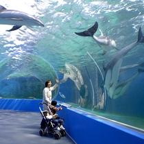 能登島水族館