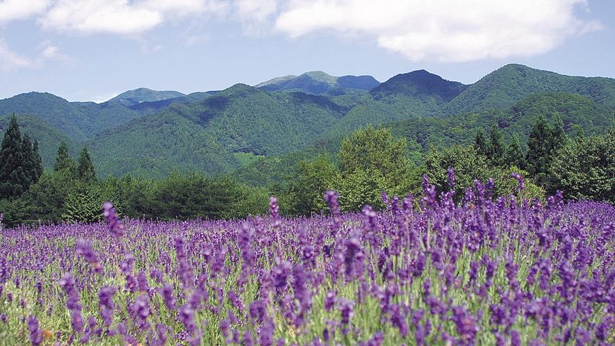 *【周辺】秋田でも有数のラベンダー園が近くにございます。