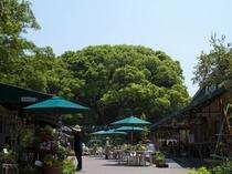 ぶどうの樹ロータリー
