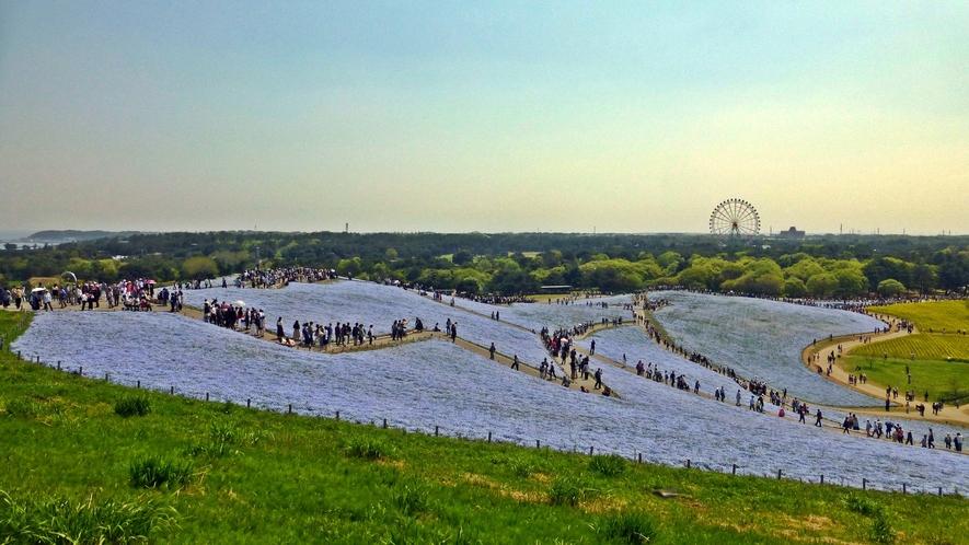 **周辺観光【国営ひたち海浜公園】大観覧車をはじめ様々なアトラクションも楽しめます。