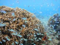 イムギャービーチの珊瑚の群生と熱帯魚
