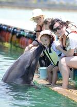 イルカと遊び