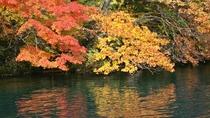 *鮮やかな赤・オレンジ・黄色の紅葉。