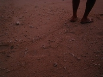 足跡の無い朝の砂浜
