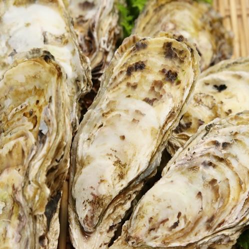 -篠島牡蠣-