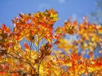 秋は紅葉!