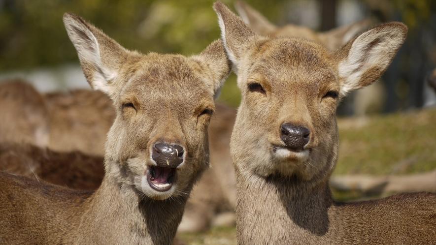 わかさ名物 笑う鹿