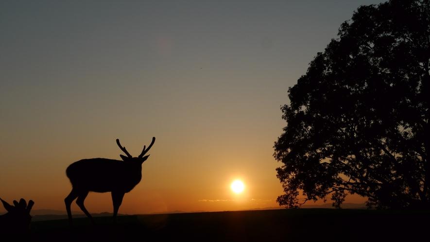 夕日と鹿 若草山より