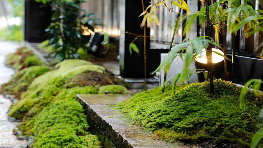 癒しの苔庭