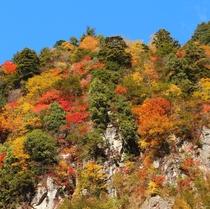 楽高瀬渓谷の紅葉(七倉付近)