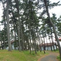 *コテージ一例/丘の上の緑の中でコテージライフをお楽しみ下さい。