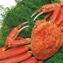 蟹のイメージ