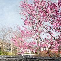 *【外観】入り口には花が芽吹き、お客様をお迎えします。