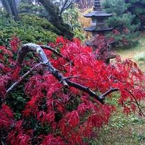 *【秋/庭】当館自慢の日本庭園。真っ赤に彩る紅葉をご鑑賞頂けます。見頃:11月下旬