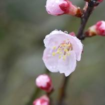 *【庭園】季節の草花の景色をお楽しみ下さい!