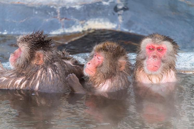函館熱帯植物園 ニホンザルの入浴