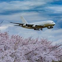 成田市さくらの山公園(春)
