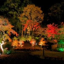 湯河原美術館 紅葉ライトアップ