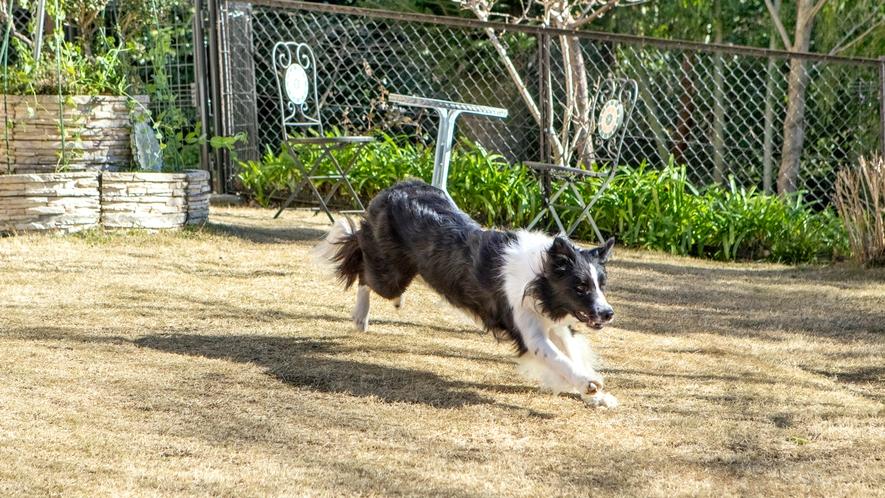 大型犬でもおもいっきり走り回れるドッグランも。