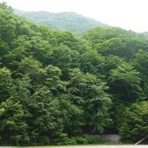 *周辺環境/マイナスイオンと森林の香りに包まれたここは、療養にぴったり。
